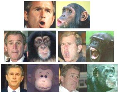 Monkeybush